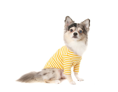 Stripe T-shirts_Yellow